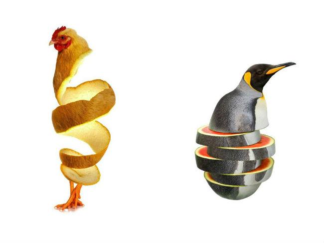 sarah-deremer-funky-hybrid-animals1