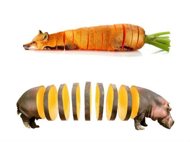 sarah-deremer-funky-hybrid-animals4