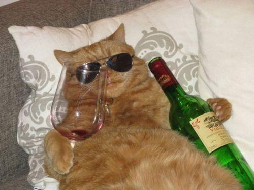 wine-cat