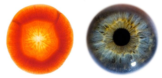 carotte-oeil