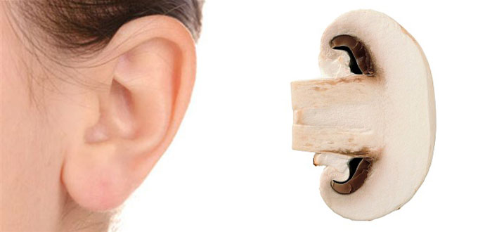 champignon-oreille
