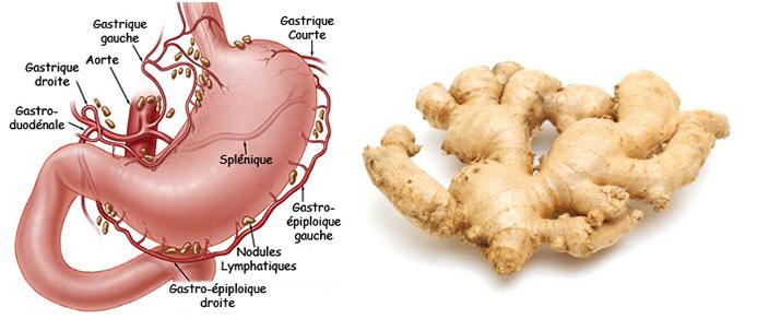 gingembre-estomac