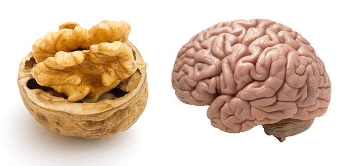 noix-grenoble-cerveau