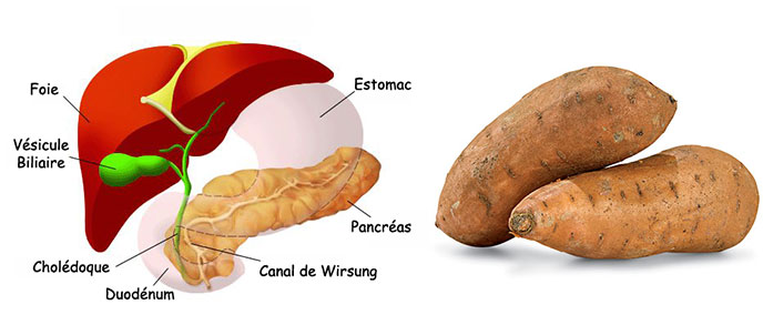 patate-douce-pancreas