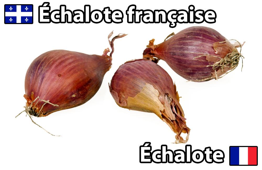 bob-le-chef-termes-culinaires-france-vs-qc-echalote